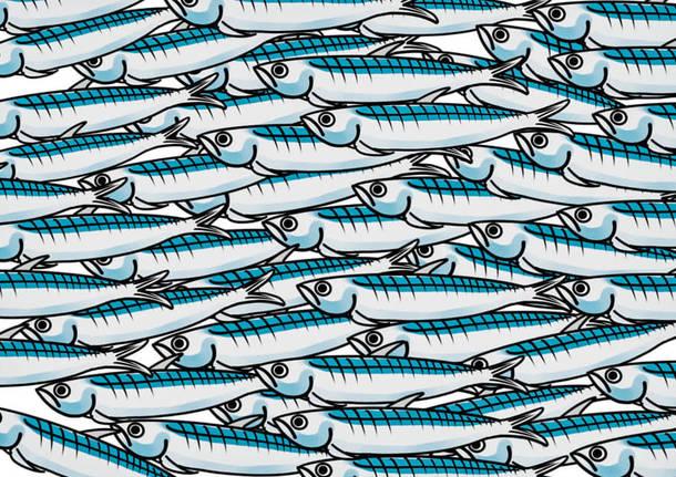 bergamo pride sardine